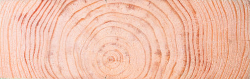 Background from Wooden Concentric Section Stock Photo