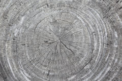 Background of wooden cut texture Stock Images