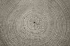 Background of wooden cut texture Stock Photos