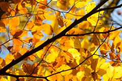Background of yellow autumnal branches. In a forest stock image