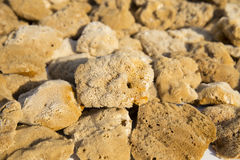 Background of yellow and brown colored natural sea sponge Stock Photo