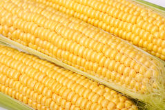 Background from yellow corn cobs Royalty Free Stock Images