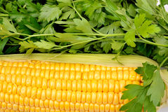 Background from yellow corn cobs and parsley Royalty Free Stock Images