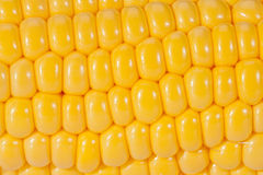 Background of yellow corn grains on the colb macro Royalty Free Stock Photos
