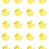 The background of yellow ducklings. Stock Image