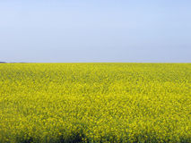 Background of yellow field and blue sky stock image