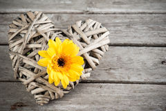 Background with yellow flower Stock Photo