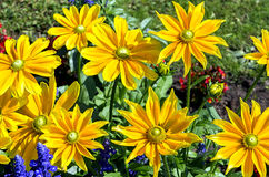 Background of yellow flowers Stock Images