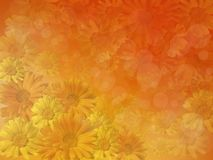 Background of yellow flowers in the haze. Royalty Free Stock Photo