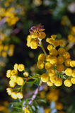 Background of yellow flowers Stock Image