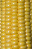 Background of yellow fresh corn texture. Stock Images