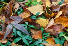 Background of yellow, green and brown leaves stock images