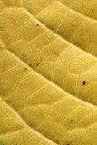 Background of yellow leaf Royalty Free Stock Photos