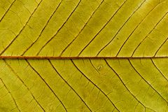 Background of yellow leaf sample stock photos