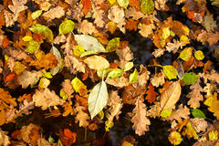 Background of yellow leaves Stock Photo