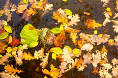 Background of yellow leaves Stock Photos
