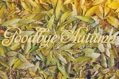 Background from yellow leaves. Autumn stock photography