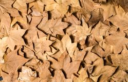 Background of yellow leaves stock images