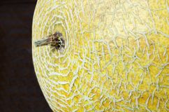Background from yellow melon Stock Photos
