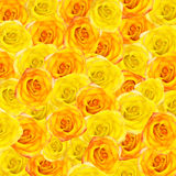 Background from yellow and orange roses Royalty Free Stock Photos