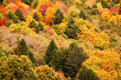 Background of yellow and orange trees in autumn Royalty Free Stock Image