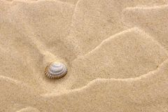 Background with yellow sand and a shell. On the beach Stock Image