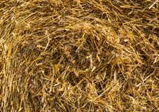The background of yellow straw is ideal for inscription texture background. Ideally as an image for the background stock photography