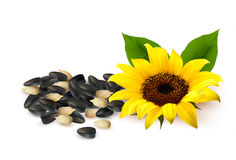 Background with yellow sunflowers and sunflower se Stock Photography