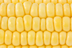 Background of yellow sweet corn Stock Photos