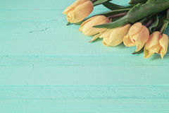 Background with yellow tulips with drops of water on blue painte. D wooden planks. Place for text. Top view with copy space stock photography