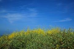 Background yellow wildflowers blue sky Stock Photo