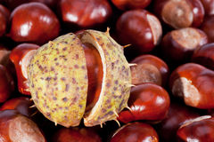 Background of young chestnuts macro Stock Image