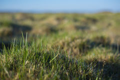 Background - a young, green grass covered with drops of dew. Stock Photos