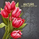Background for your text with the image of pink tulips Royalty Free Stock Images