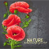 Background for your text with red poppies Stock Photo