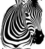 Background by zebra Stock Image