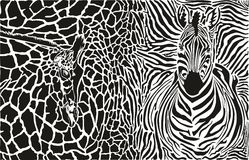 Background with zebra and giraffe Royalty Free Stock Photography