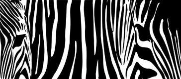 Background by zebras Stock Image