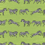 Background with zebras Royalty Free Stock Photos