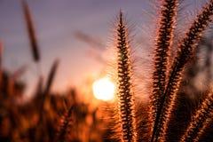 Backgroundflower brilhante para os fundos bonitos imagens de stock royalty free