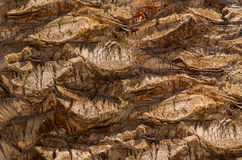 Backgroundon the basis texture of bark of the date palm Royalty Free Stock Photo