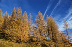 Backgrounds. Outdoor shot of the trees Royalty Free Stock Photo