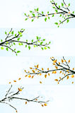 Backgrounds with apple tree Stock Images
