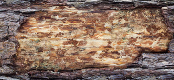 Backgrounds bark and wood texture Stock Photo