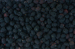 Backgrounds of blackberries Stock Photos