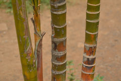 Backgrounds 066 - Close up shot of sugarcane Royalty Free Stock Images