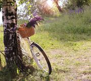 Backgrounds -- Cycling in the park Stock Images