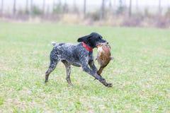 backgrounds dog hunting labrador white yellow Στοκ Εικόνα