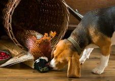 backgrounds dog hunting labrador white yellow Στοκ Εικόνες