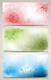 Backgrounds with flowers Stock Photography